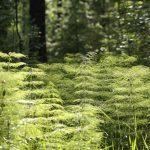 Ve Finsku chtějí udělat z lesa bioenergetický zlatý důl