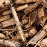 Biomasa – využítí, zpracování, výhody a nevýhody, energetické využití v ČR