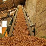 Výroba dřevních pelet v Česku neustále roste