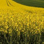 Konec podpoře biopaliv v ČR?