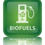 Nově vyvinuté kvasinky mají zlevnit výrobu biopaliv