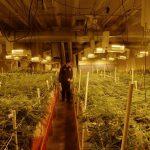 Colorado čelí prudkému nárůstu spotřeby elektřiny. Hlavní příčinou je pěstování marihuany