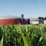 Pšenice možná letos nahradí kukuřici v bioplynových stanicích