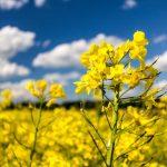 Biopaliva se v ČR dočkají další podpory