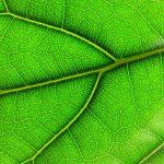 Fotosyntéza – možný směr v energetické soběstačnosti