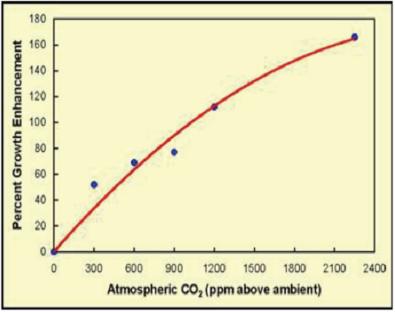 Růst vegetace s růstem koncentrace CO2