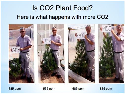 Růst stromu při různé koncentraci CO2