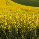 EU zvažuje snížit podíl biopaliv první generace o polovinu do roku 2030