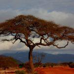 Keňa plánuje rozvoj OZE ve 23 mikrosítích