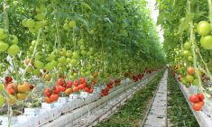Ontario Greenhouse. Zdroj: NatureFresh Farms