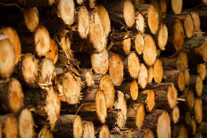 dřevo , stromy