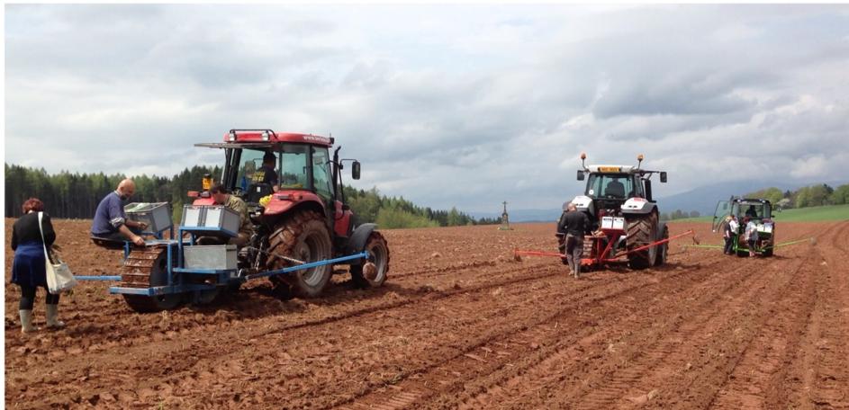 Na obrázku vidíte vzorově připravené pole pro pěstování rychle rostoucích dřevin – bez plevelů, či čehokoli zeleného