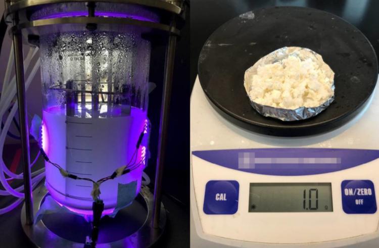 Upravené mikroby vyrábí z CO2 ve vzduchu bioplasty či biopaliva. Zdroj: Nagpal Lab / University of Colorado Boulder